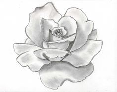 drawing beautiful roses | Rose Flower Drawing Wallpapers