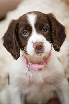 Little Millie Moo Pup, Dogs, Animals, Animales, Animaux, Puppies, Animal Memes, Animal, Pet Dogs