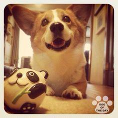 DOG OF THE DAY   @alfuku  May.11,2012  #dogofthedayjp  #webstagram - @dogoftheday- #webstagram
