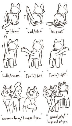 Warriors & Cats — Exploring a bit the body language of the clan.You can find Warrior cats and more on our website.Warriors & Cats — Exploring a bit the body language of the . Warrior Cats Funny, Warrior Cat Memes, Warrior Cats Series, Warrior Cats Books, Warrior Cats Fan Art, Warrior Cats Art, Animal Sketches, Animal Drawings, Cat Drawing Tutorial