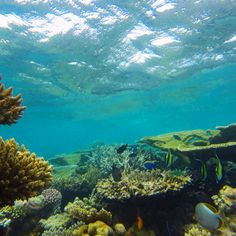 A Glimpse of Turtle Reef near Maafushi Island