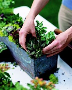 How to start a succulent container garden. http://www.midwestliving.com/garden/container/easy-succulent-container-gardens/