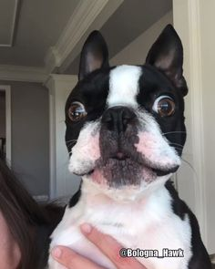 When there is nothing left to say-When there is nothing left to say - French Bulldog Puppies, Cute Dogs And Puppies, Baby Puppies, Doggies, Corgi Puppies, Boston Terrier Love, Funny Boston Terriers, Boston Terrior, Cute Baby Animals
