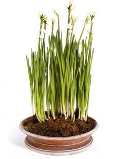 Buy Bulb Planters at Goods for the Garden
