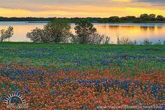 bardwell lake texas - Google Search