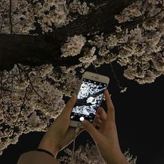 Image discovered by ☾ XIM ☾. Find images and videos about bts, aesthetic and flowers on We Heart It - the app to get lost in what you love. Insta Goals, Melrose Place, Night Aesthetic, Ulzzang Girl, Aesthetic Pictures, Cherry Blossom, Retro, Flirting, Flora