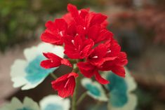 Paper Geranium – Handmade Paper Flowers – Geraniums available in any color – Office Decor, Restaurant Decor, Home Decor, Bouquet, Gift Faux Flowers, Diy Flowers, Flower Pots, Handmade Flowers, Paper Magic, Crepe Paper Flowers, Foliage Plants, Geraniums, Flower Crafts