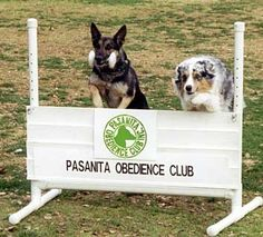 Dogs quickly learn whether or not you really expect them to respond to your commands every time or if they might be able to get away with not obeying on occasion. Don't send false messages! Don't give your dog a command unless you are prepared to follow through and insure your dog obeys that command.