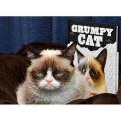Tardar Sauce la Gata Gruñona - 20 cosas que no sabes sobre Grumpy Cat   eHow en Español