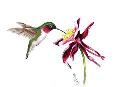Paint Page: Hummingbird - Modern Hummingbird Drawing, Hummingbird Pictures, Watercolor Hummingbird, Hummingbird Flowers, Hummingbird Tattoo, Watercolor Bird, Watercolor Paintings, Acrylic Paintings, Flower Line Drawings