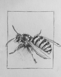 A wasp #wasp