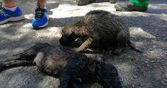 Fallecen siete perros en Jaén tras quedar encerrados en el interior de un coche