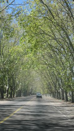 On the road to the wineries in Mendoza, Argentina; by Briana Thiodet briana.t@travelstore.com