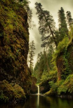 Towering Over Punchbowl Falls , Oregon