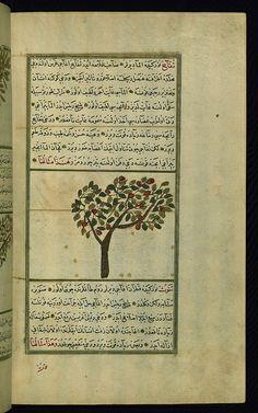 Turkish version of the Wonders of creation, An apple tree, Walters Manuscript W.659, fol. 206b  