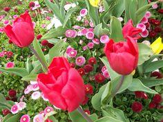 Paisajes De Flores   Tulipanes y flores 1280x960 Paisajes / Otros