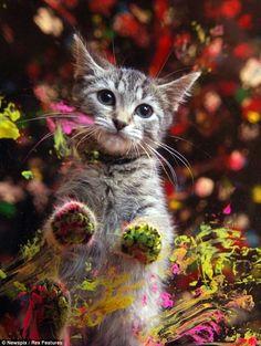 Soft Kitty by KiyoKiyo
