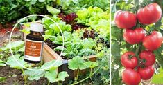 Flower Drawing Images, Flower Images, Garden Trellis, Garden Gates, Flower Aesthetic, Raw Food Recipes, Bonsai, Garden Landscaping, Flower Arrangements