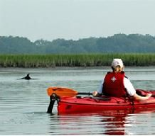 Paddlng the Edisto River Kennedys' Carolina Heritage Outfitters  33 03 55 N 80 36 47 W  near Columbia, Charleston and Savannah.  canoesc.com