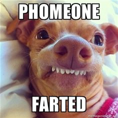 Phomeone  Farted | Phteven Dog