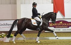Dressage horse sets new record price at UK auction - Horse & Hound http://www.horseandhound.co.uk/news/brightwells-dressage-sale-results-479074