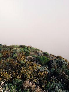 lafleurdesmurailles:In montaña de oro by...