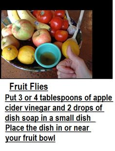how to kill fruit flies fruit holder