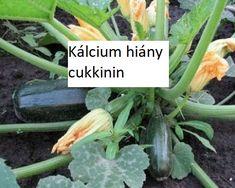 Zucchini, Make It Yourself, Garden, Garten, Lawn And Garden, Gardens, Gardening, Outdoor, Yard