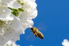Lessons from the Hive – Words Like Honey