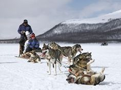 Husky dog-sledding trip in Finland, perfect spot for catching the Aurora Borealis!