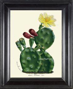 BOTANICAL PRINT HOUTTE  Art Print 93 Beautiful Yellow Cactus