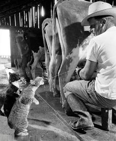 Fotos de Coleccion: Gatito tomando leche muuuuy fresca  07-07-15