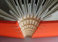concertina album, accordion spine