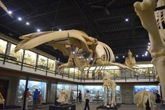 Museum of Osteology - The only bone museum in the United States is located in Oklahoma City. Stop and explore over 300 skeletons and learn more about the animal world.