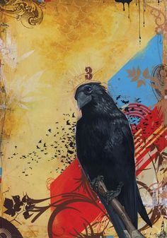 Blaine Fontana... btw, crows are smarter than you think!