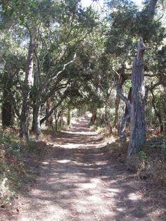 Jack's Peak County Park - Monterey