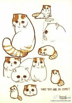 Snoopy the Cat.  Nadine MONVOISIN-JOSSELIN via Albah i au onto Ah... Les chats!