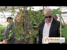 Marihuana, cloruro de magnesio...Plantas que curan: Josep Pamiés y Txumari Alfaro, Parte7 - YouTube
