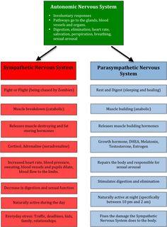 sympathetic vs. parasympathetic nervous system