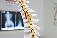 #Chiropractic is primarily used as a pain relief alternative for #muscles, #joints, bones, and connective tissue, such as cartilage, ligaments, and tendons. It is sometimes used in conjunction with conventional medical treatment.