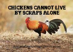 Chickens Cannot Live By Scraps Alone #ChookHealthDay
