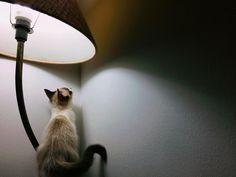 Minha caçadora de mosquitos favorita  by gabrieltrevisan