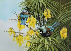 Craig Platt nz bird artist and oil paintings of Tui New Zealand Art, Maori Art, Wildlife Artists, Wildlife Art, Painting, Bird Illustration, Bird Artists, Love Art, Nz Art