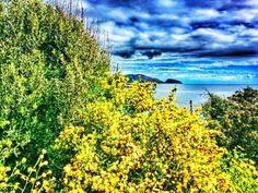 Sbam!  #sardegna #fullcolor #yellow #flowerpower #broom #ginestra #mothernature #seaview #sky #clouds #landscape #whataview #nature #spring #cloudy #amazing #sardinia #sardinien #offseason