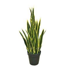 Sansevieria Plant, Sansevieria Trifasciata, Indoor Plants, Indoor Outdoor, Snake Plant, Types Of Plants, Artificial Plants, Design Crafts, Bonsai