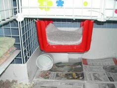 guinea pig cage accessories - use step stool hanging upside-down to make more floor space