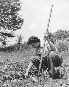 United States, August 1943. A young woman working in a Victory Garden during World War ll.