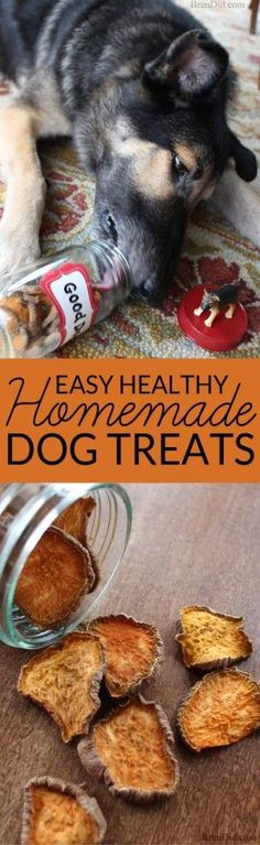 Make your own easy homemade dog treats with this easy to follow tutorial and feed your pet healthy homemade dog treats.
