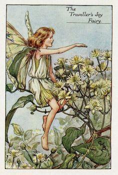 Travellers Joy Flower Fairy Vintage Print c1927 by TheOldMapShop