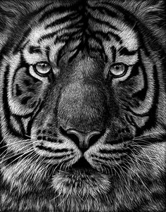scratchboard art | The scratchboard art below is a... - WetCanvas